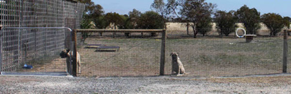Make Your Own Dog Fence Diyit